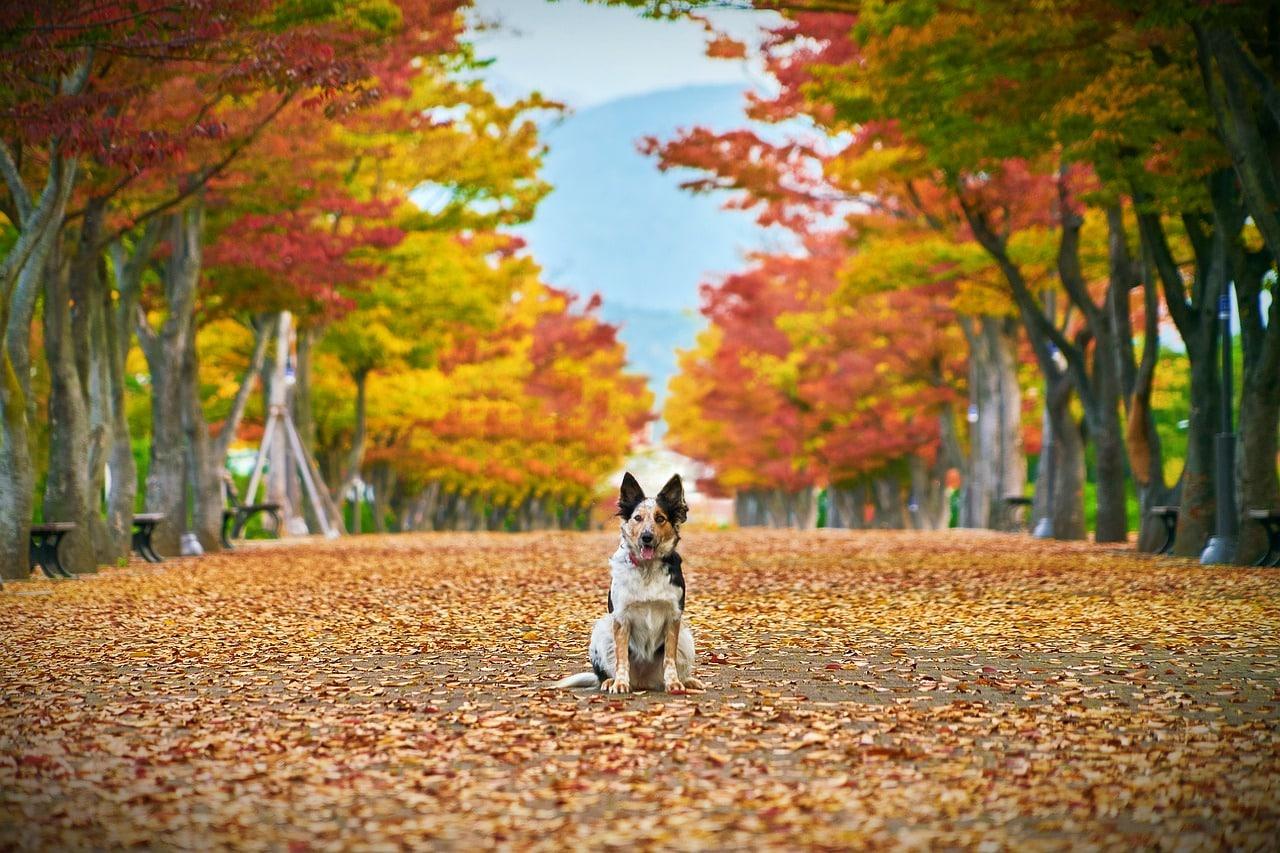 autumn, dog, nature